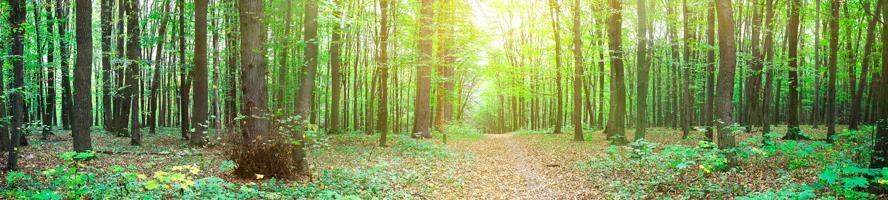 Gestão Ambiental: um valor fundamental